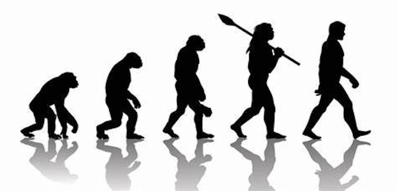Silhouette of 5 walking figures from ape to modern man.