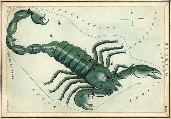 Antique print of a green scorpion with stars marked.