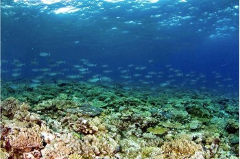 One Tree Island coral reef