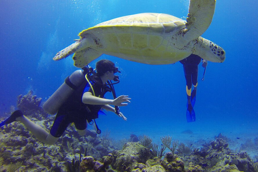 person scuba diving and swimming with a sea turtle