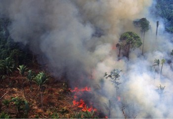 Amazon Rainforest Wildfire