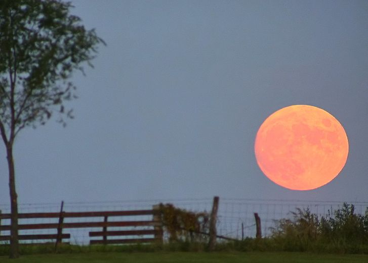 Big bright orange moon rising behind rustic country fence.