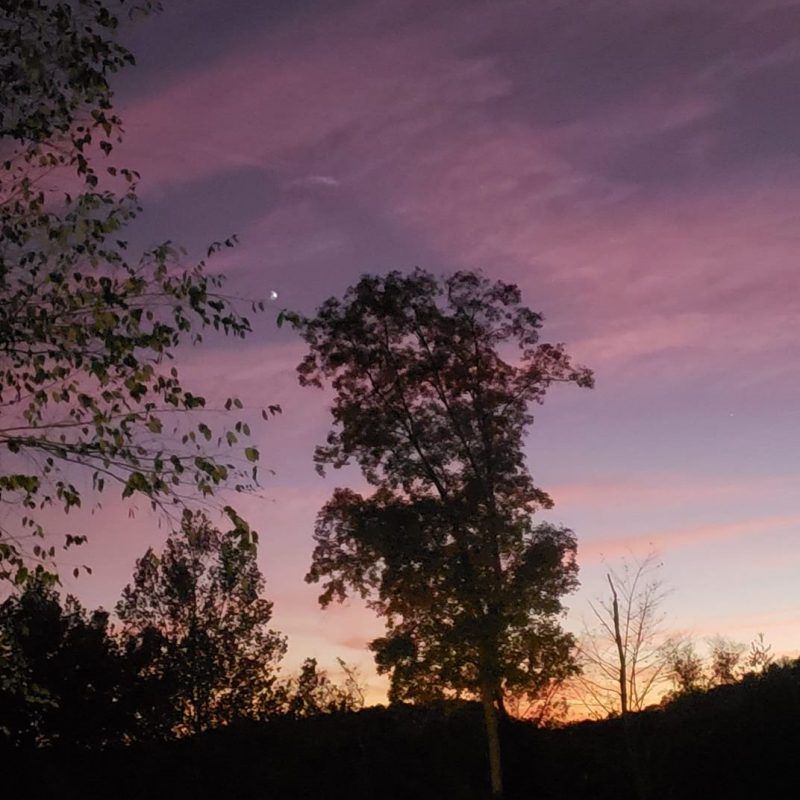 Silhouette of a tree against a purple-pink sky, small dot of light on the upper left.