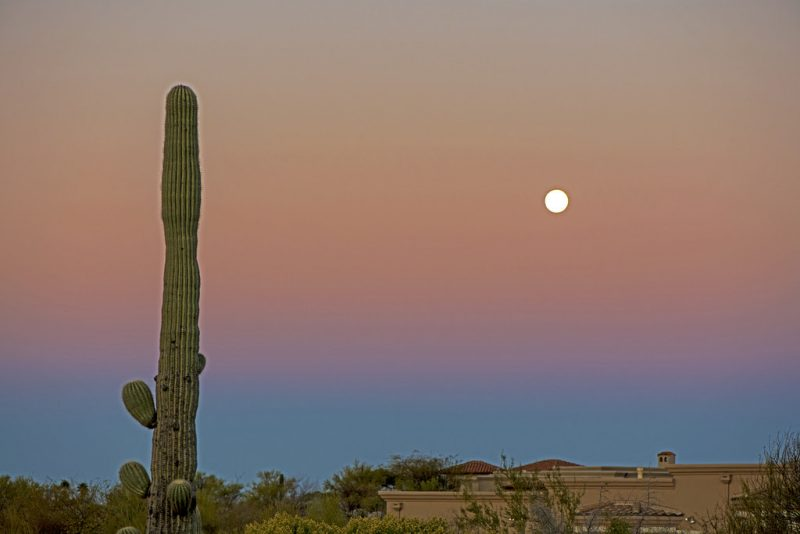 Tall saguaro cactus and full moon against sky with dark pink and blue bands.