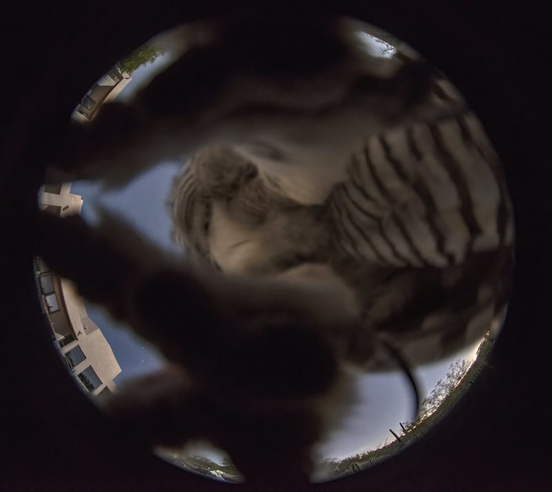 Round sky image obscured by an owl's feet and striped rear appearing large and blurred.