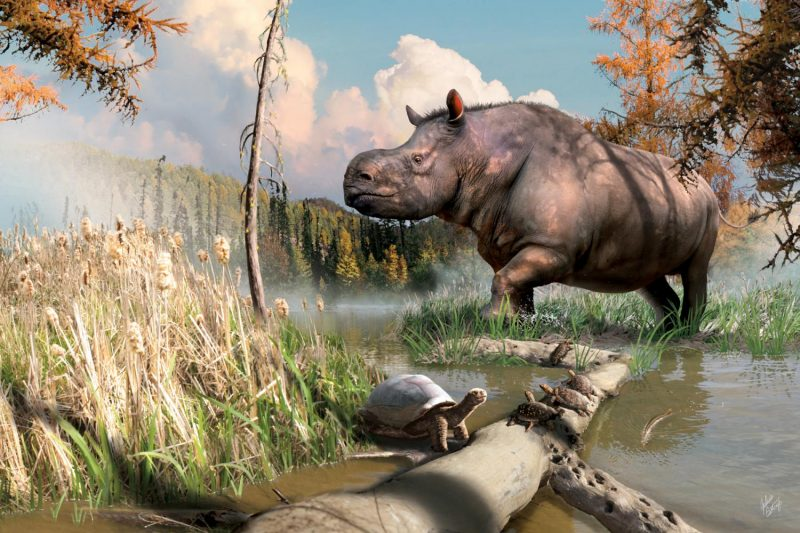 Huge animal similar to a rhino without the horn walking through a little rill in a marsh.
