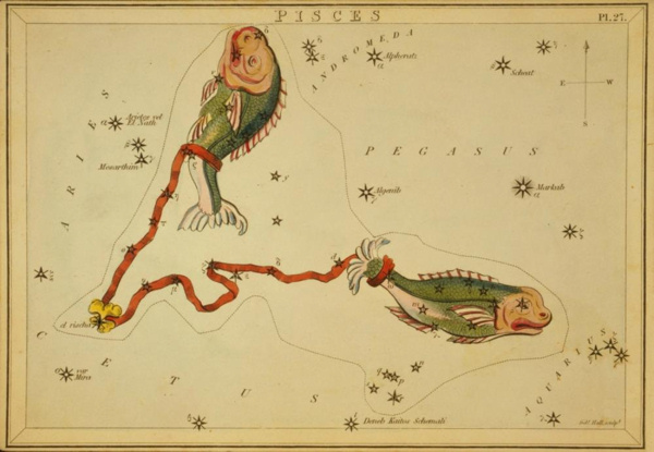 Antique colored etching of two fish tied together by the tails.