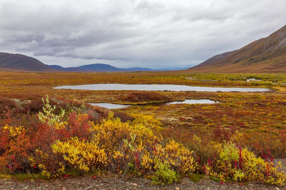 Fall colors in tundra, in Tombstone national park. Yukon, Canada