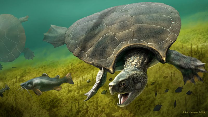 Illustration of a swimming turtle and a fish.