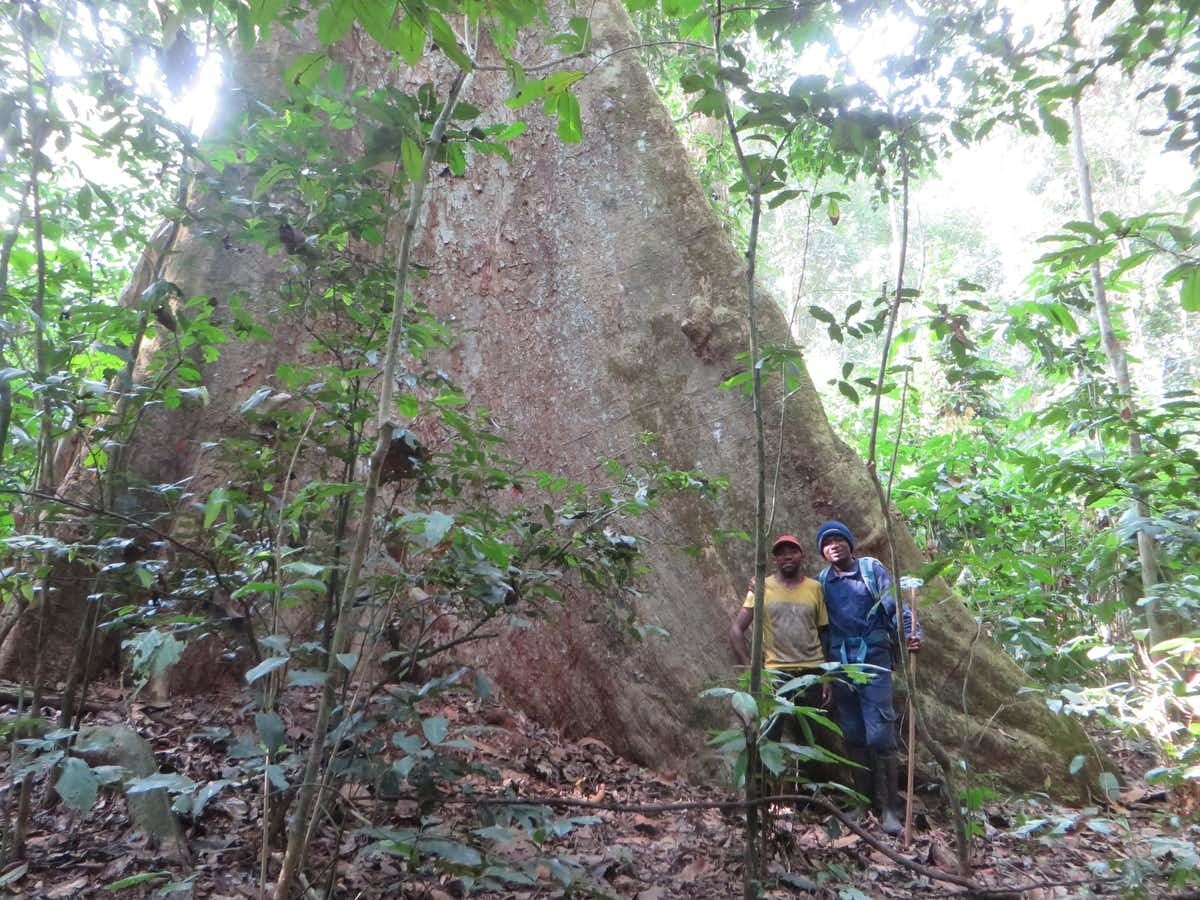 The researchers behind the new study made more than 2 million tree measurements.