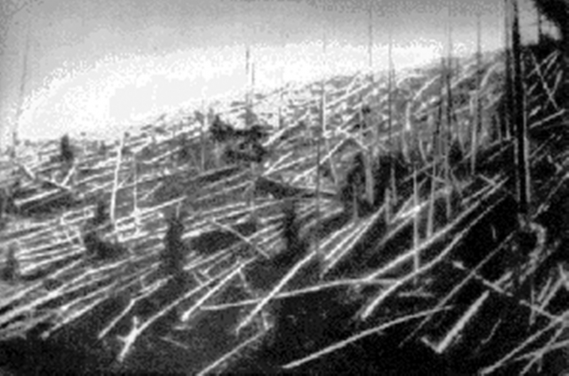 Matchstick-like trees lying on the ground as far as you can see, in black and white.