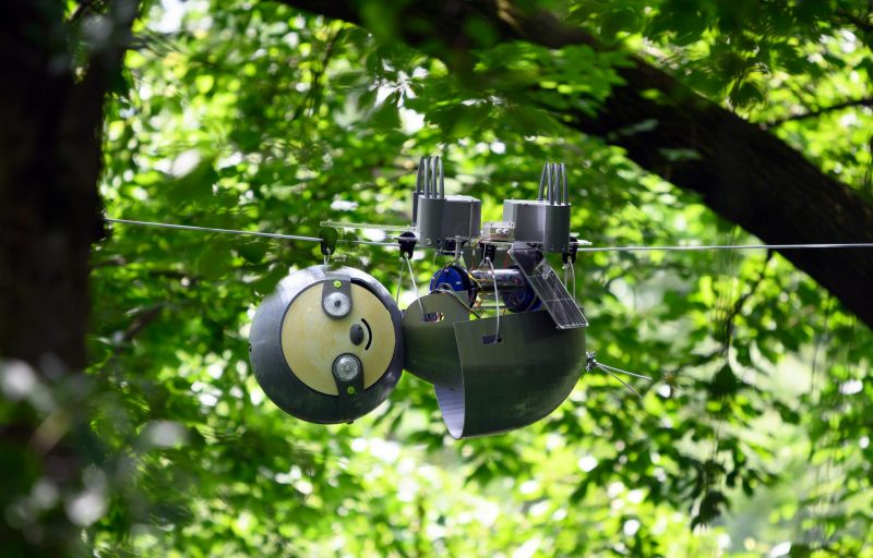 Robot with round 'head' and body suspended from a cable running between trees against a leafy background.