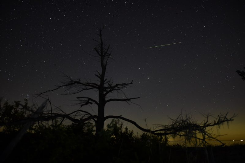 In starry sky above a single bare tree, a thin streak that goes from whitish to greenish.