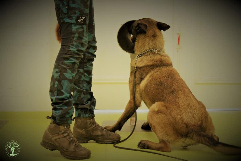 Camo-clad legs next to a seated brown dog sniffing at a round black thing.