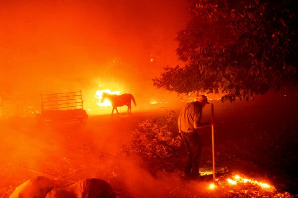 The L.N.U. Lightning Complex fire tore through the property of Bill Nichols, 84, who worked to tamp out flames in Vacaville, Calif., on Wednesday.