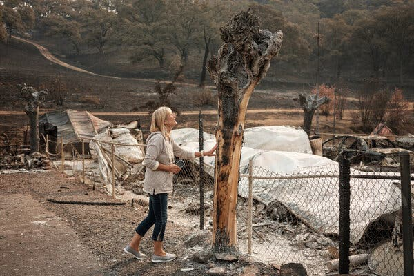 A resident of the Spanish Flat Mobile Villa, destroyed last month by the Hennessy Fire in California.