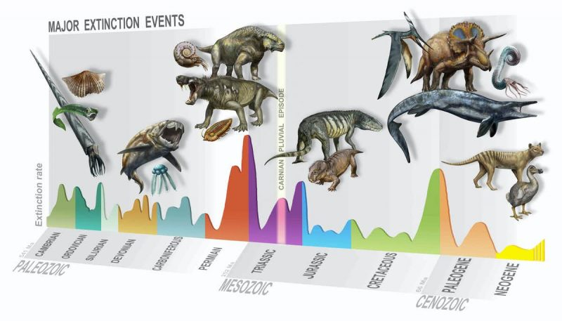 A graph of geologic time with pictures of different species from ammonite to dodo above the different eras.