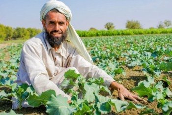 middle east farmer