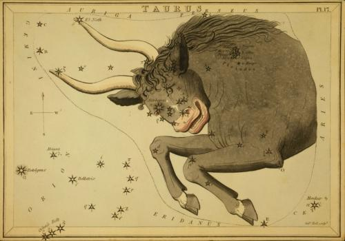 Antique color etching of front half of a bull with stars and constellations.