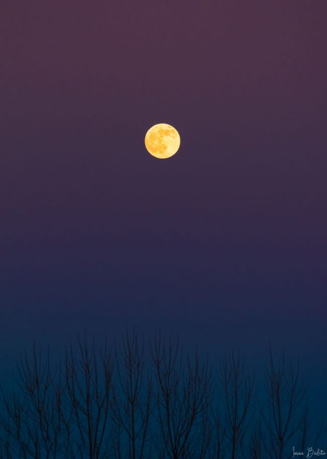 Full yellow moon in sky fading from deep blue to purple, above bare trees.