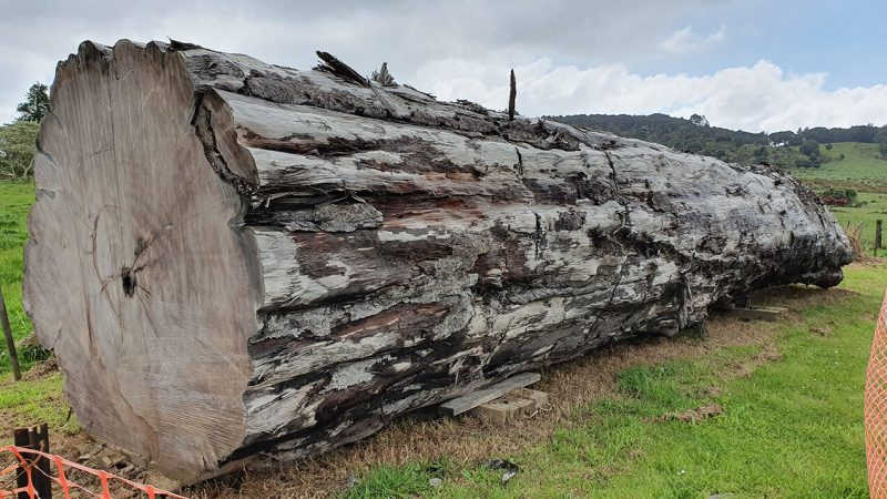 Giant log laying on green grass.
